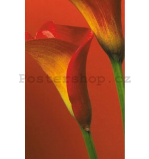 Fotoobraz - Red Calla Lillies