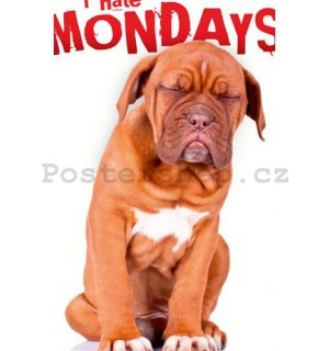 Fotoobraz - I Hate Mondays
