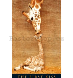Fotoobraz - First Kiss giraffe